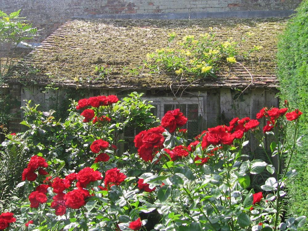 Ein alter Garten mit Rosen